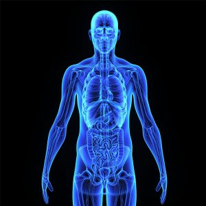 inhalant effects on the body